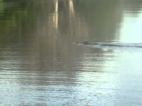 Croc Attack in Australia's Kakadu National Park
