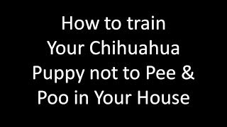 Potty Training Chihuahuas  Potty Training Chihuahua Puppies - Free Mini Course Potty Training Chihua