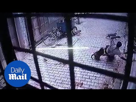 Video: Troop of monkeys attacks man in Vrindavan, Uttar Pradesh