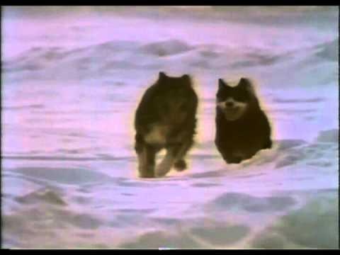 Film Antarctica - Jiro & Taro