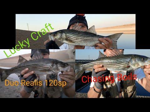 California Aqueduct Striper Fishing (Episodes #24 Chasing Boils)