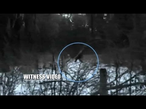 This Bigfoot Sighting Was a Family Affair | The Best Bigfootage