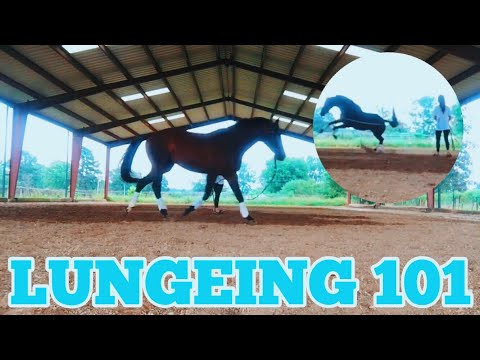 LUNGING YOUR HORSE // Tips & Tricks