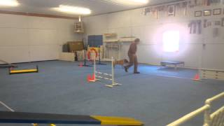 Darin And Chinese Shar-pei Really Running Ukc Agility Level 3 Trial 1