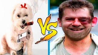 Месть Животных - Смешные Животные против Людей - Приколы с Животными и Людьми