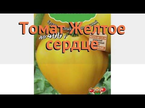 Томат обыкновенный Желтое сердце (zheltoe serdtse) 🌿 обзор: как сажать, семена томата Желтое сердце