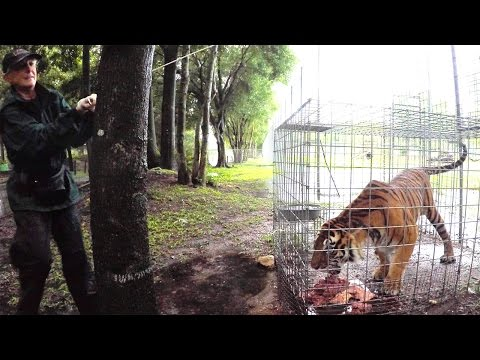 Big Cat Rescue Prepares For A Tropical Storm