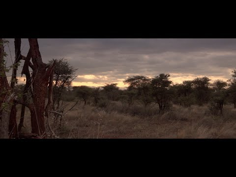 Meru National Park-Kenya - Coldplay By The Piano Guys - PEPONI