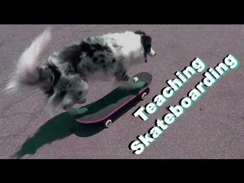Teach your dog to Skateboard - Dog Tricks