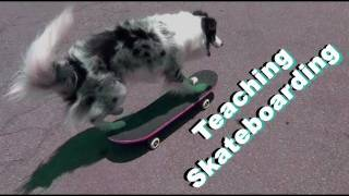 Dog Tricks Tutorial: Teach Skateboarding