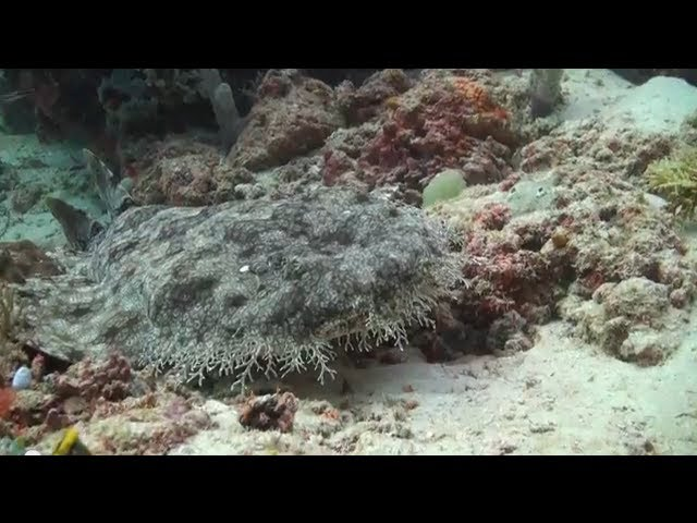 Scuba Diving Raja Ampat in Indonesia