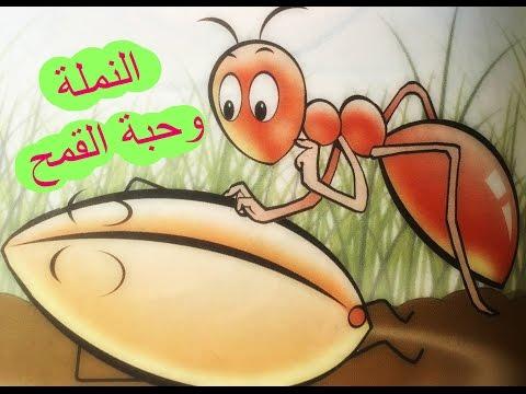 النملة وحبة القمح | أحبتي الصغار