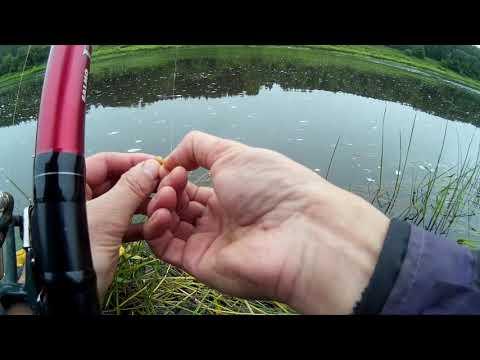 Рыбалка на поплавок на пшеницу +Бонус.Голавль 1.5кг
