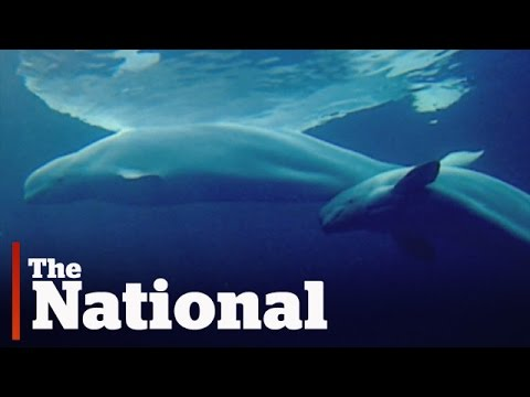 Ottawa strengthens protections for whale populations