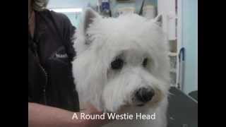 Magical Touch - The Westie Head