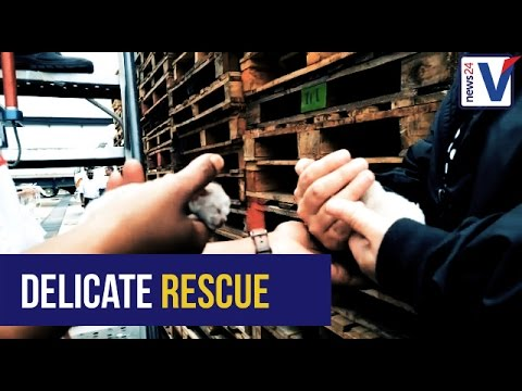 SPCA dog and kitten rescue