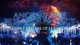 Ancient Tree Research Project | Giant Cedars of Lebanon Part 2 ▶️️