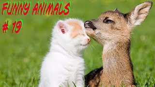 Приколы с животными №19 FUNNY ANIMALS смешные животные.