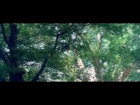 Ninaithathu yaaro neethane #pattukku oru thalaivan பாட்டுக்கு ஒரு தலைவன்