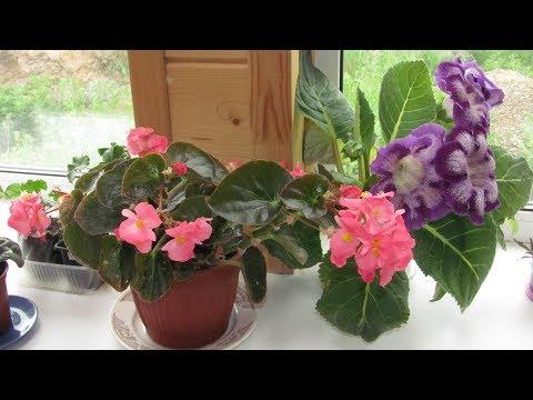 Вопрос: Как поливать комнатные растения?
