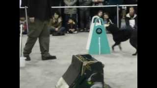 Dog K9 Bomb Detection Unit. Meet Dog Alex & His Buddies