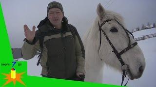 Каково ездить на лошади верхом?  Смотрим.