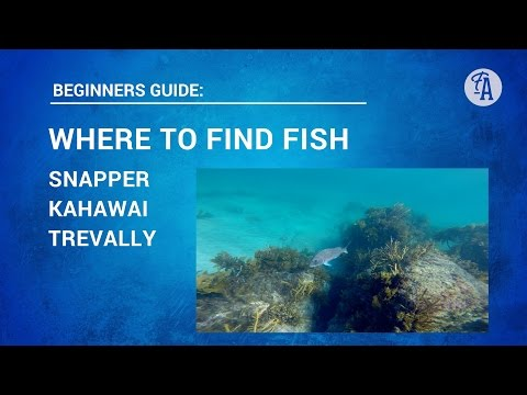 FIND THE FISH: Where And How To Find Your Own Fishing Spots