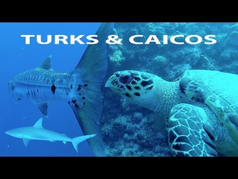 Turks and Caicos SCUBA Diving