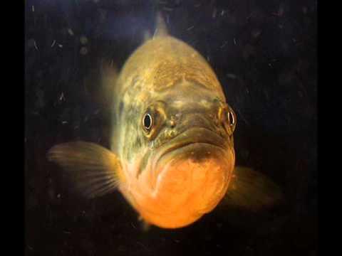 Gone Fishin - Theme Song