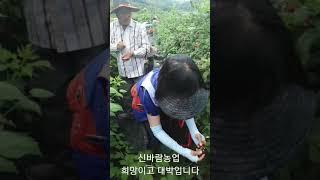 [대박농업방송] #복분…