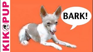 How to train your dog not to bark- Episode 1 - barking at noises in the house- dog training