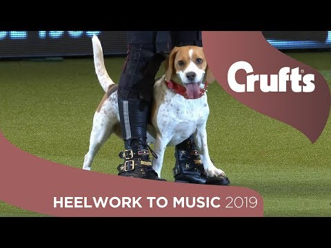 Dancing Dogs! Pedigree Mercury dances to Queen at Crufts 2019