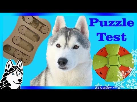 Testing My Dog's intelligence | Puzzle Test Challenge | DOG IQ Test | w/ Gohan the Husky