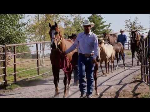 Montana Horse Ranch – America's Heartland