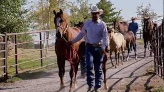 Montana Horse Ranch - America's Heartland