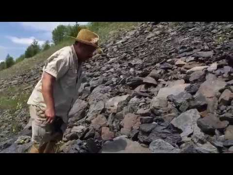 Fossil Hunting in Pennsylvania