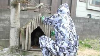 飼い主様見つかりました☆(2011・6・14) このビーグル犬の飼い...