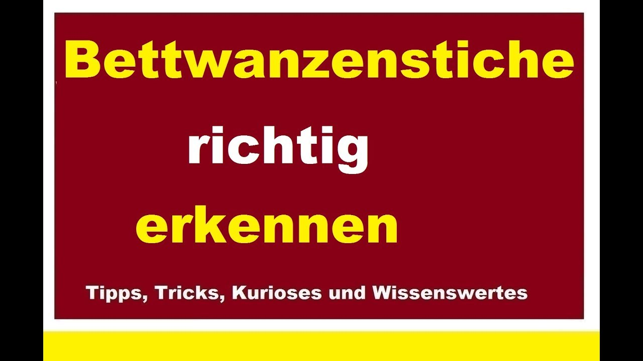 Bettwanzen Erkennen Stiche Bettwanzenstiche Bettwanzenbisse Erkennen Wanzenstiche Hauswanzenbisse Unterschied Flohbiss