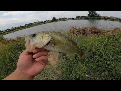 NORTHERN VIRGINIA FISHING HOME POND 1