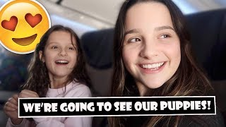 We're Going To See Our Puppies! 😍 (WK 381.6) | Bratayley