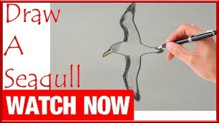 How To Draw A Seagull - Learn To Draw - Art Space