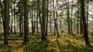 Lange Feat. Leah - Don
