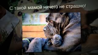 16 собак и их чудесные мини копии