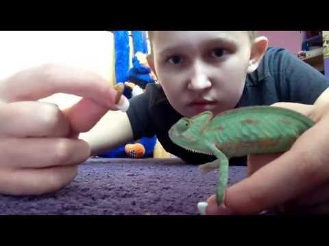 Feeding squirt my pet chameleon:)