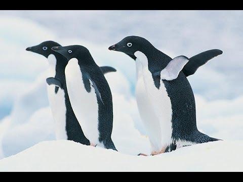 Antarctic Highlights