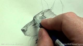 набросок собаки(Как рисовать собак - http://www.pencilart.ru/dogs.html., 2015-07-22T17:00:34.000Z)