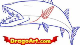 How to draw a barracuda, step by step