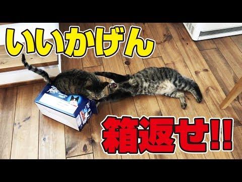 猫さんが暇そうにしていたから箱を渡してみた!