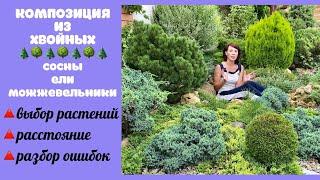 Создаём КОМПОЗИЦИЮ ИЗ ХВОЙНЫХ для небольшого сада. Сосны Можжевельники Ели