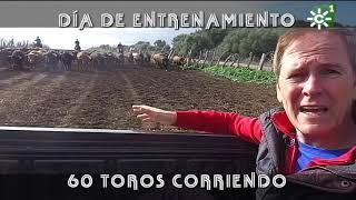 Toros de Nuñez del Cuvillo en el corredero | Toros desde Andalucía